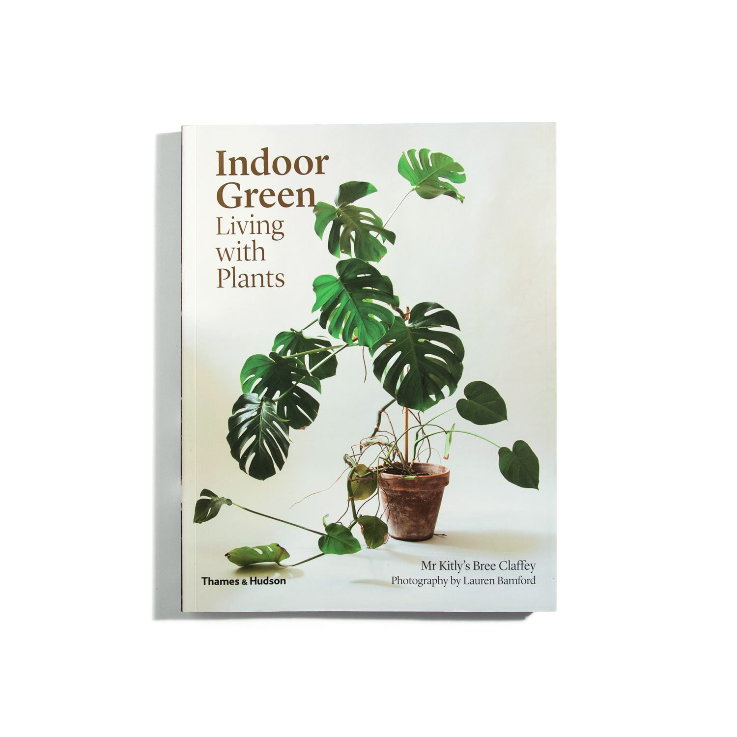Indoor green living with plants